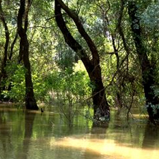 delta dunarii cazare chilia veche delta dunarii